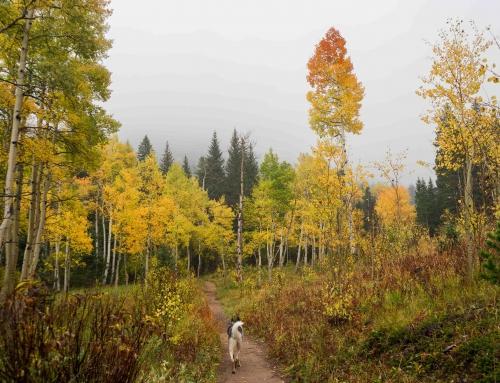 Trip Log: Raccoon Trail – CO – September 2017