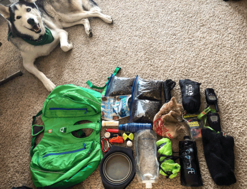 GUIDE: Packing Your Dog's Pack