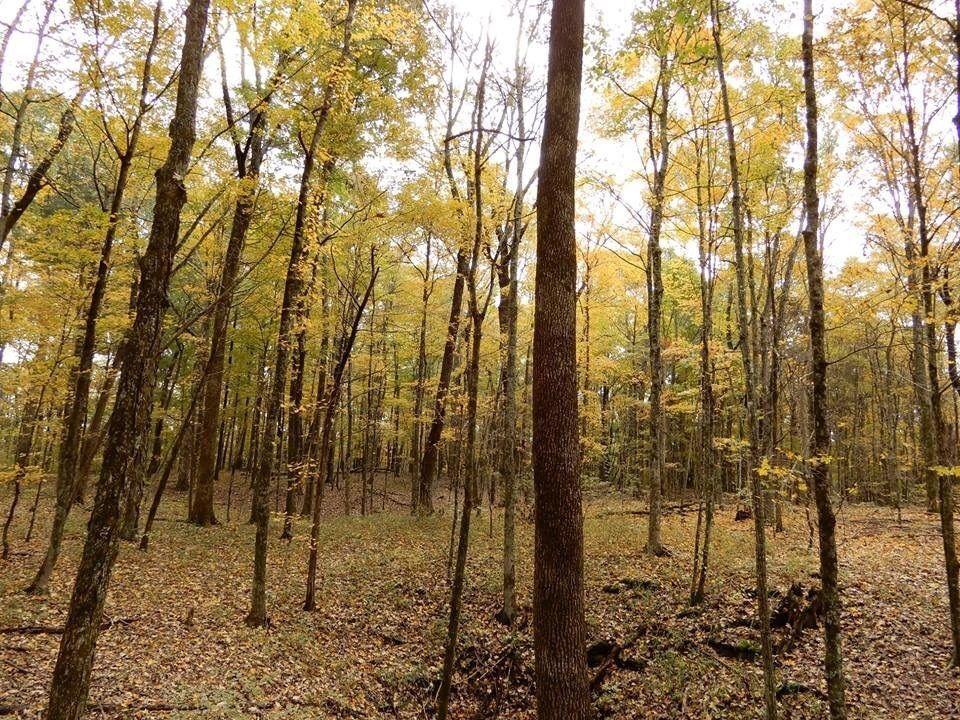 CannaVenture- Halloween Hemp Hike - Tennessee - Hidden Springs Trail - Cedars of Lebanon - Tennessee