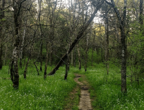 Hidden Springs Trail – TN Hike – April 2020